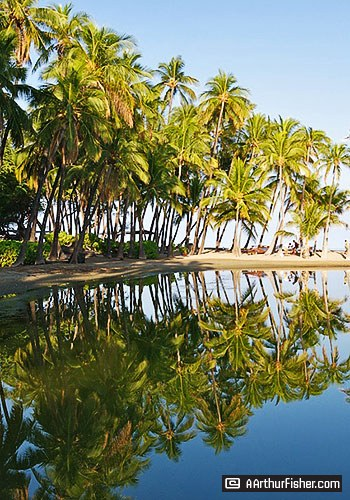 Palm Reflections