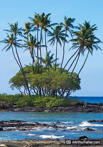 Hawaiian Palm Grove